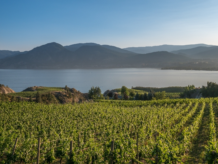 Vineyard Chad Wozniak Remax Penticton